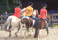 Ponys. Foto: Stadt Oldenburg